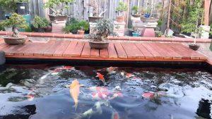 Top 10 địa chỉ thi công hồ cá koi chuyên nghiệp tại Tphcm