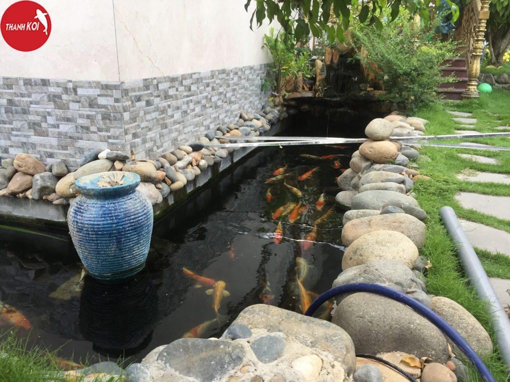 Đơn vị thi công thiết kế hồ cá koi nhanh chóng giá rẻ tại tphcm