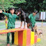 Trung tâm huấn luyện chó cảnh, chó nghiệp vụ Trung Đức